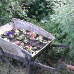 Wheelbarrow open Garden Day 2016