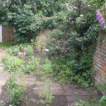 Open Garden Day 3
