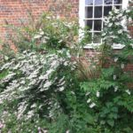 Open Garden Day 1