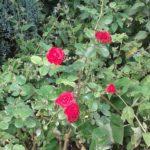 Open Garden Day 2
